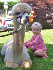 Alpacas are very educational, and fun for all ages!