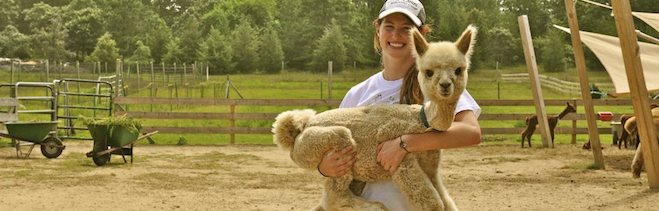 About Island Alpaca Company on Martha's Vineyard