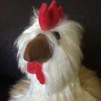 Baby Alpaca Chicken bird rooster