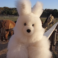Alpaca fur bunny toy island alpaca martha's vineyard