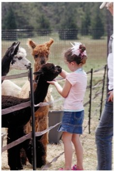 Alpaca Discovery - Alpaca Basics for Children & Ad