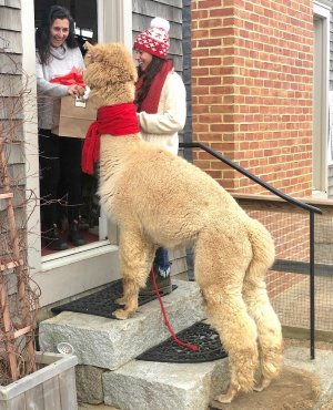 Alpaca Gram Message delivery